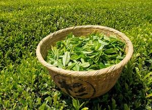 Какой зеленый чай самый качественный и полезный