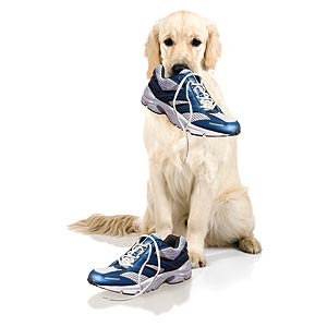 Собака и потеря веса